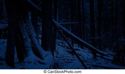 Passing Fallen Logs In Snowy Forest At Night - Moving past...