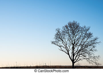 Lone tree silhouette - Bare lone tree silhouette by a bright...