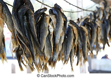 Fishes Drying - Bunches of mullet fish drying natuarrly...