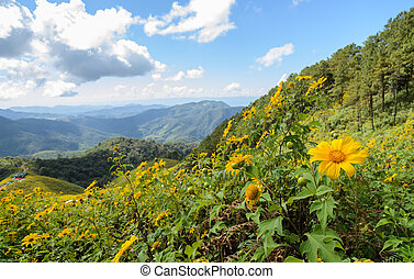 Mountain landscape with wild mexican sunflower blooming...