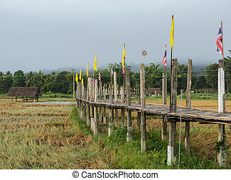 Old Bamboo bridge pass rice field in the morning view -...