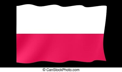 Polish flag . Waving