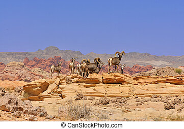Deer in the Nevada desert - A hed of deer in the Valley of...