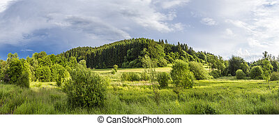bright sunlight on the Eifel meadow with forest in...