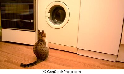 Young cat looking into working washing machine - Young cat...