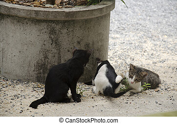 Domestic thai cats sitting and play on floor at outdoor