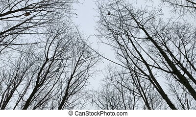 Walk under the dry dead tree branches without leaves