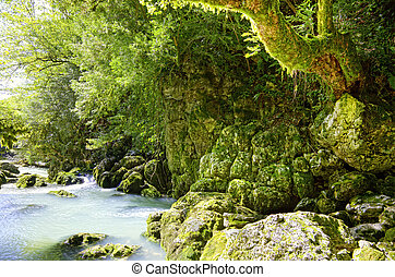 deep forest and river landscape photo