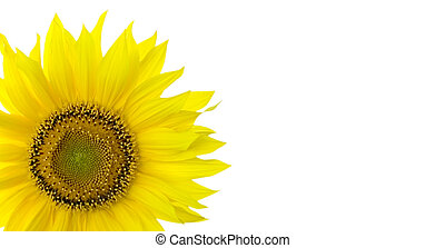 Sunflower background with place for your text