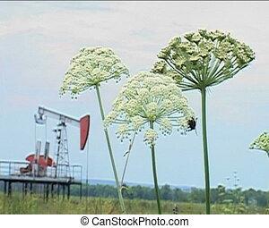 field, flower, Bumblebee