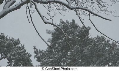 Thick Snowing Branches and Trees - Branch and trees view...