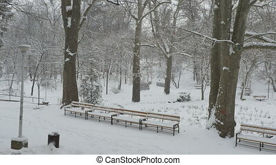 Snowing Day in Park - View of the benches in the park...