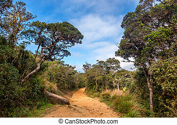 Scenic path in tropical mountain forest on hike - Scenic...