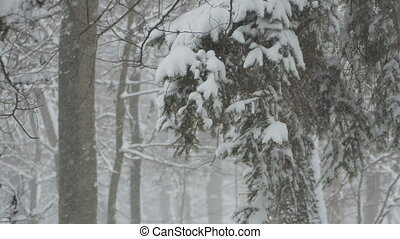 Snowing in the Forest - Snowfall in the forest with tree...