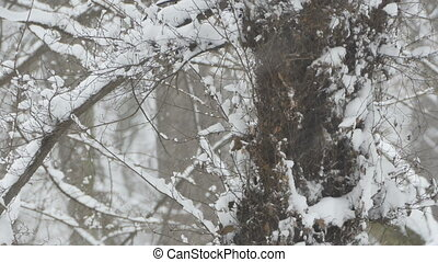 Snowing Trees and Vegetation - View of winter tree trunk and...