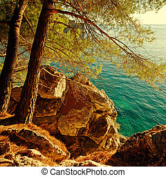 turquoise Adriatic Sea and pine tree,Croatia. Afternoon...