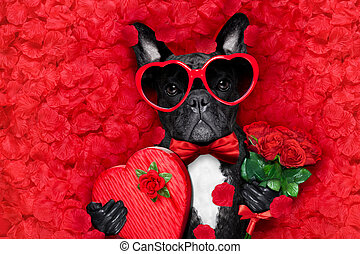 valentines dog in love - valentines french bulldog dog in...