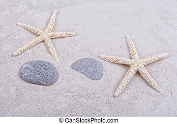 White starfishes and two shells on a sand - White starfishes...