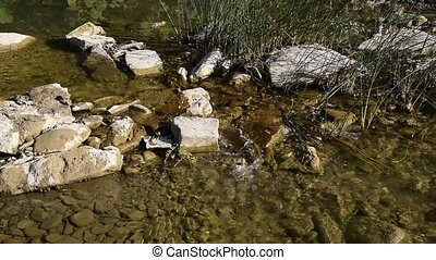 Creek with clear running water. The flow of water, twice...