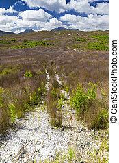 australia grass land - An image of the australian grass land