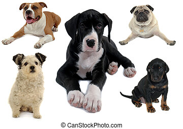 Dog collection isolated on white background