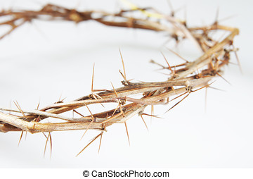 Crown of Thorns on light background