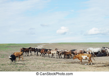 Herd of horses and cows in a dry steppe with parched...