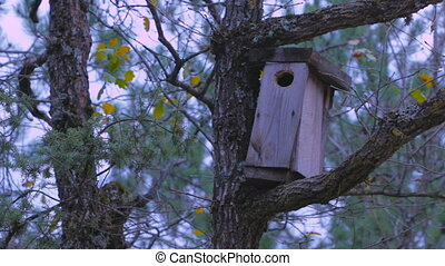 Forest birdhouse - Birdhouse in the woods. A house for birds...