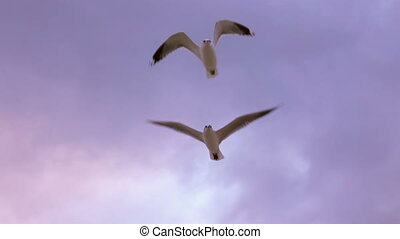 Seagulls Flying at Sunset - Seagulls Flying Over the Sea and...