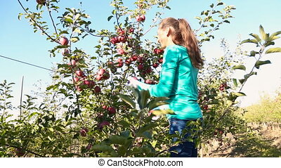 woman throws and catches apples in the garden