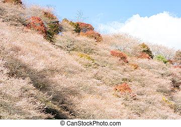 Obara Toyota Nagoya Japan - Nagoya, Obara. Autumn Landscape...