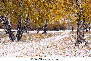 Landscape with a snowy lane among yellow birches in early...