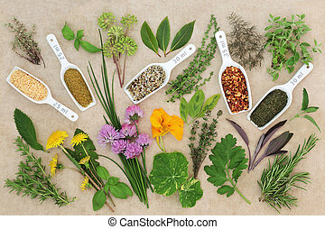 Fresh and Dried Spice and Herb Collection