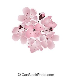 Japanese cherry. Bouquet of pink sakura blossom with bud. Isolated on white background. illustration