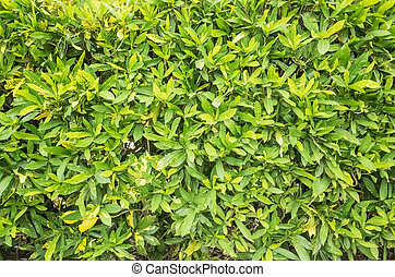 Nature background of green