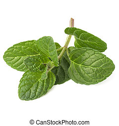Fresh mint herb leaves isolated on white background cutout