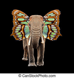 Elephant with butterfly wings - Close elephant with...