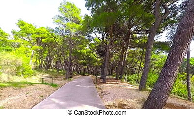 Road in the forest - dashcam view - Brela, Makarska Riviera,...