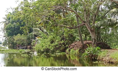 Slow Motion by River Bank with Palms Plants in Tropics -...