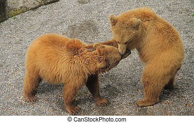 Two bears having fun playing with each other