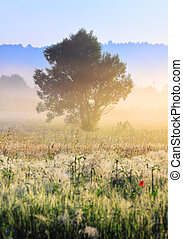 Foggy morning - A tree in morning light with delicate fog...