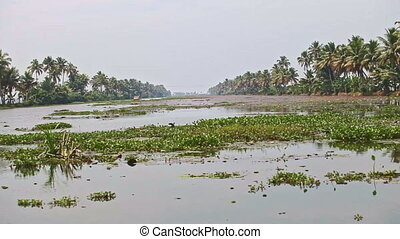 Motion across Wide River to Palms on Bank in Tropics -...