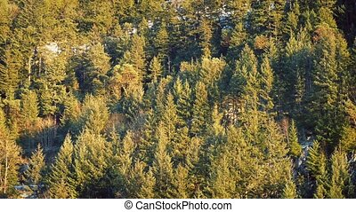 Aerial View Of Mountain Forest At Sunset - Moving past sunny...