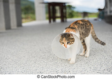 little cat with Elizabethan collar after spay surgery