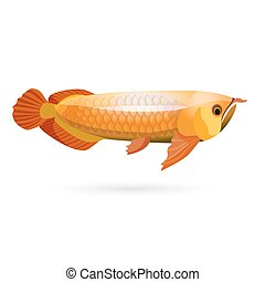 Arowana freshwater bony fish known as bonytongues isolated...