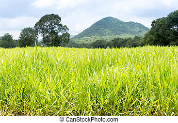 Countryside of grass filed with mountains and tree in blue...