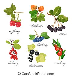 Set of berries with leaves botanical vector illustration....