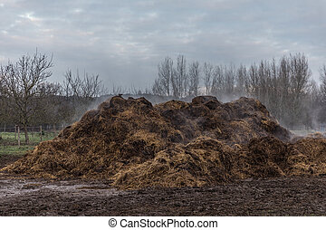 Horse Manure Pile - Hot horse manure smoking pile in the mud