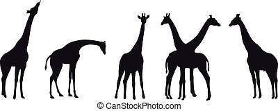 Girafe vector - Collection of different vector silhouettes...