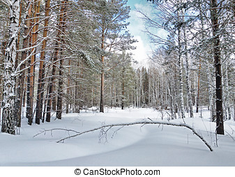 Beautiful winter landscape with pine forest in bright frosty...